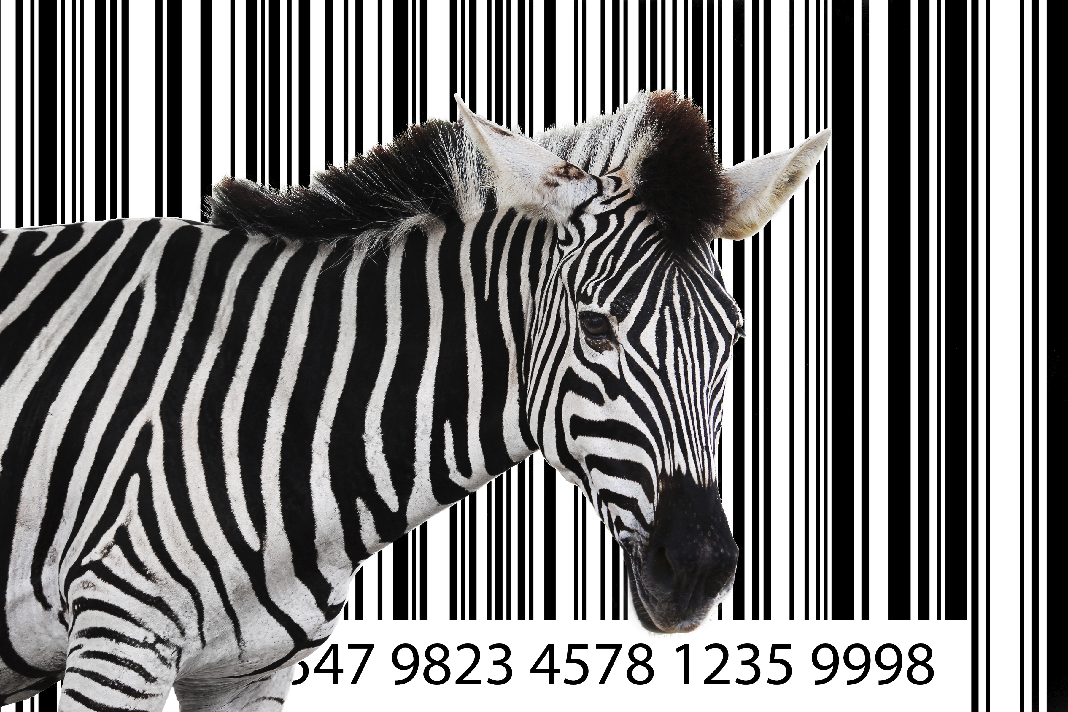 Zebra with a barcode